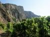 Die berühmte Weinlage Traiser Bastei am Rotenfels